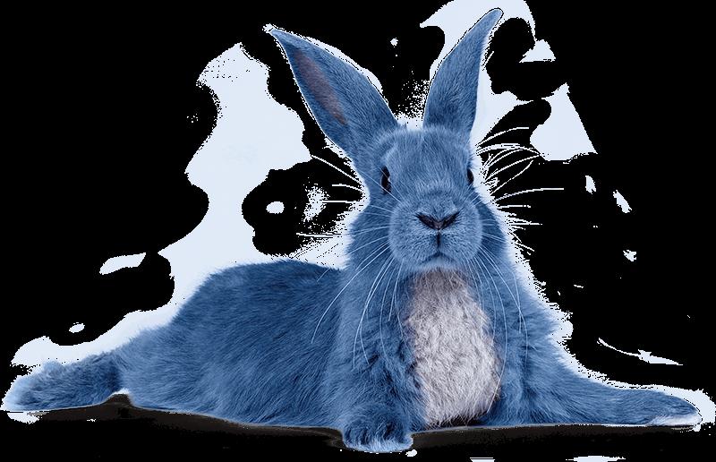 Well's Blue Bunny Ice Cream